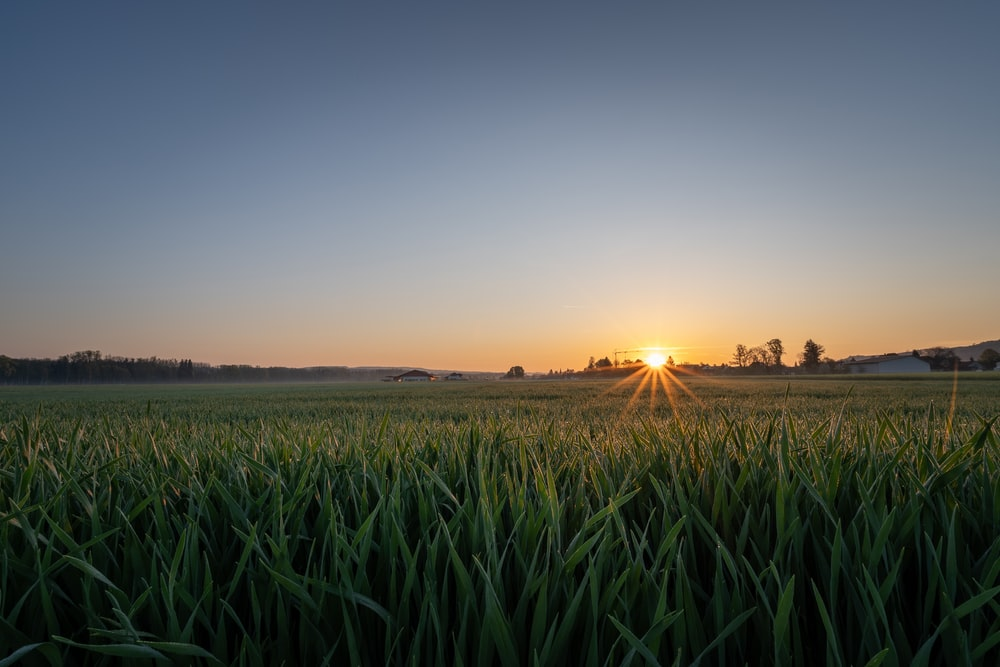 landscape photography of grass during sunset