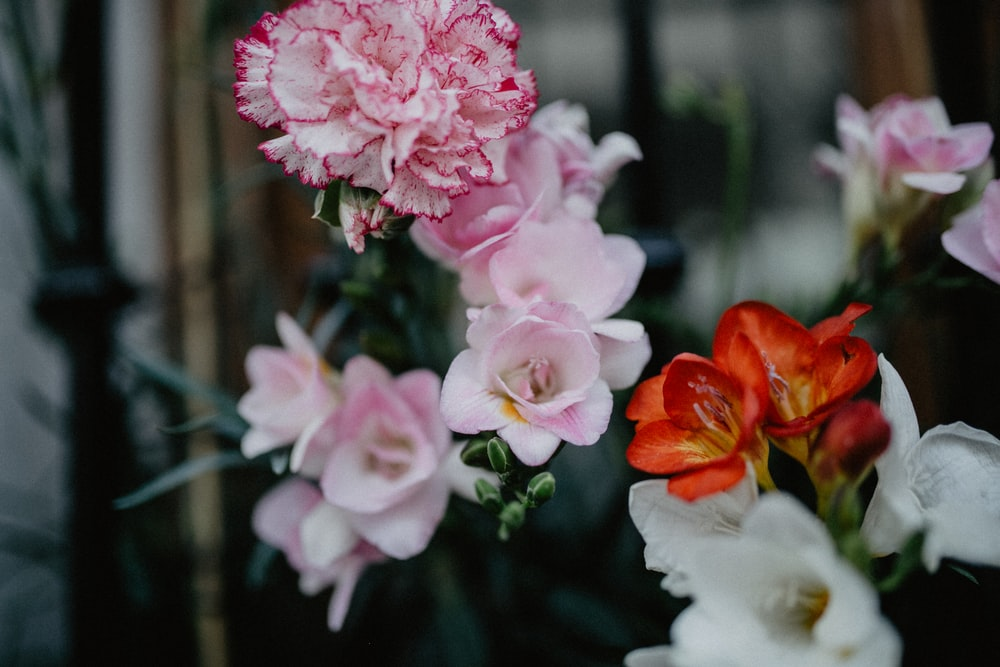 photo of pink and orange petaled flowers