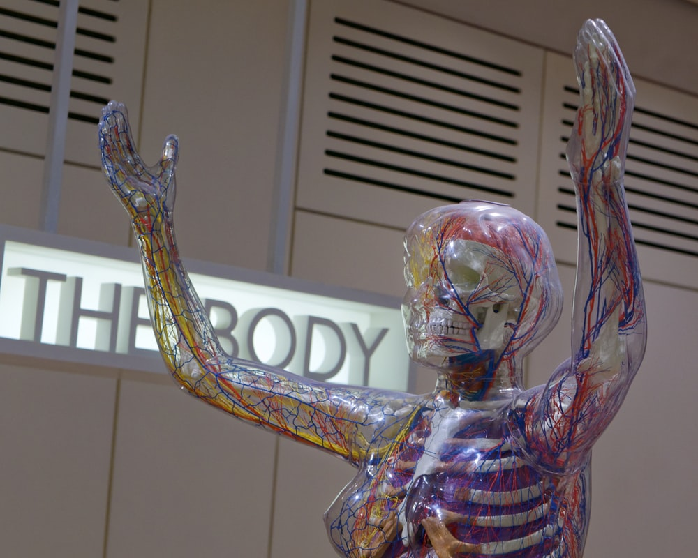 Human Anatomy Pictures Hd Download Free Images Stock Photos On