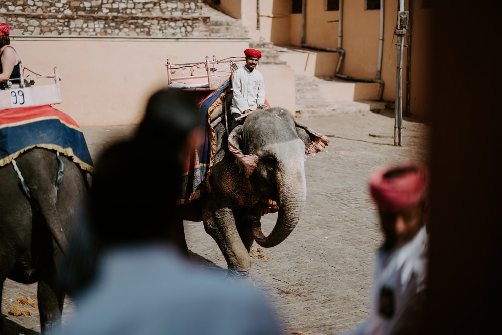 person riding on gray elephant