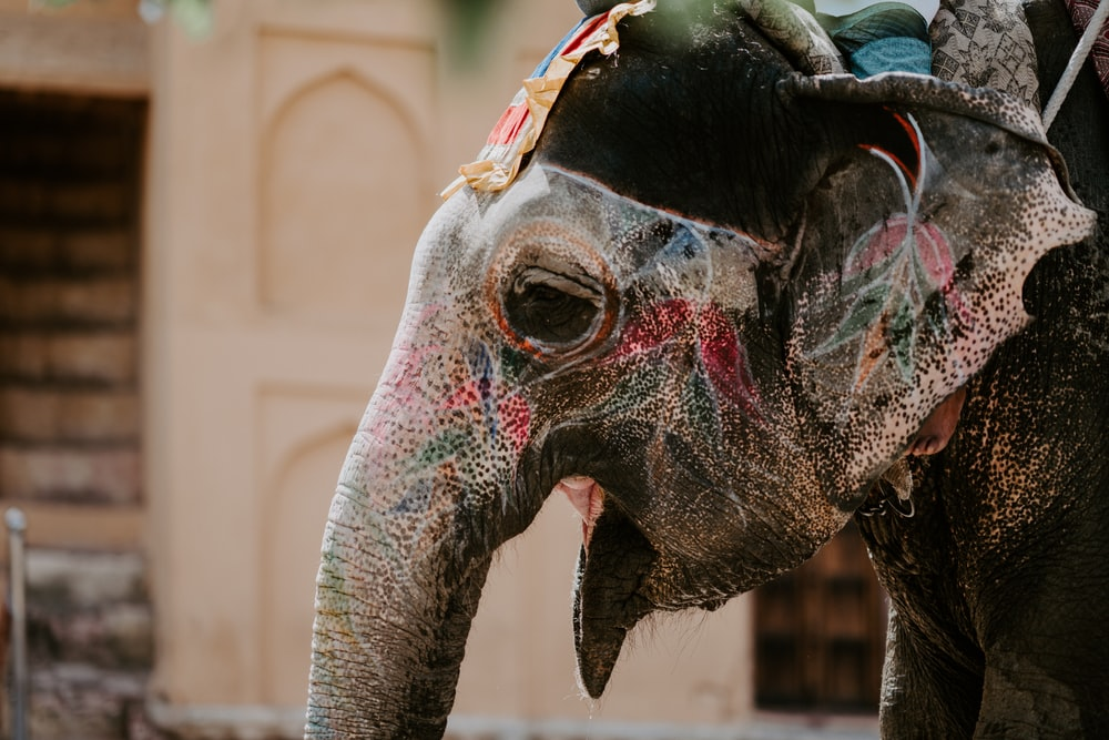 gray elephant with floral paint