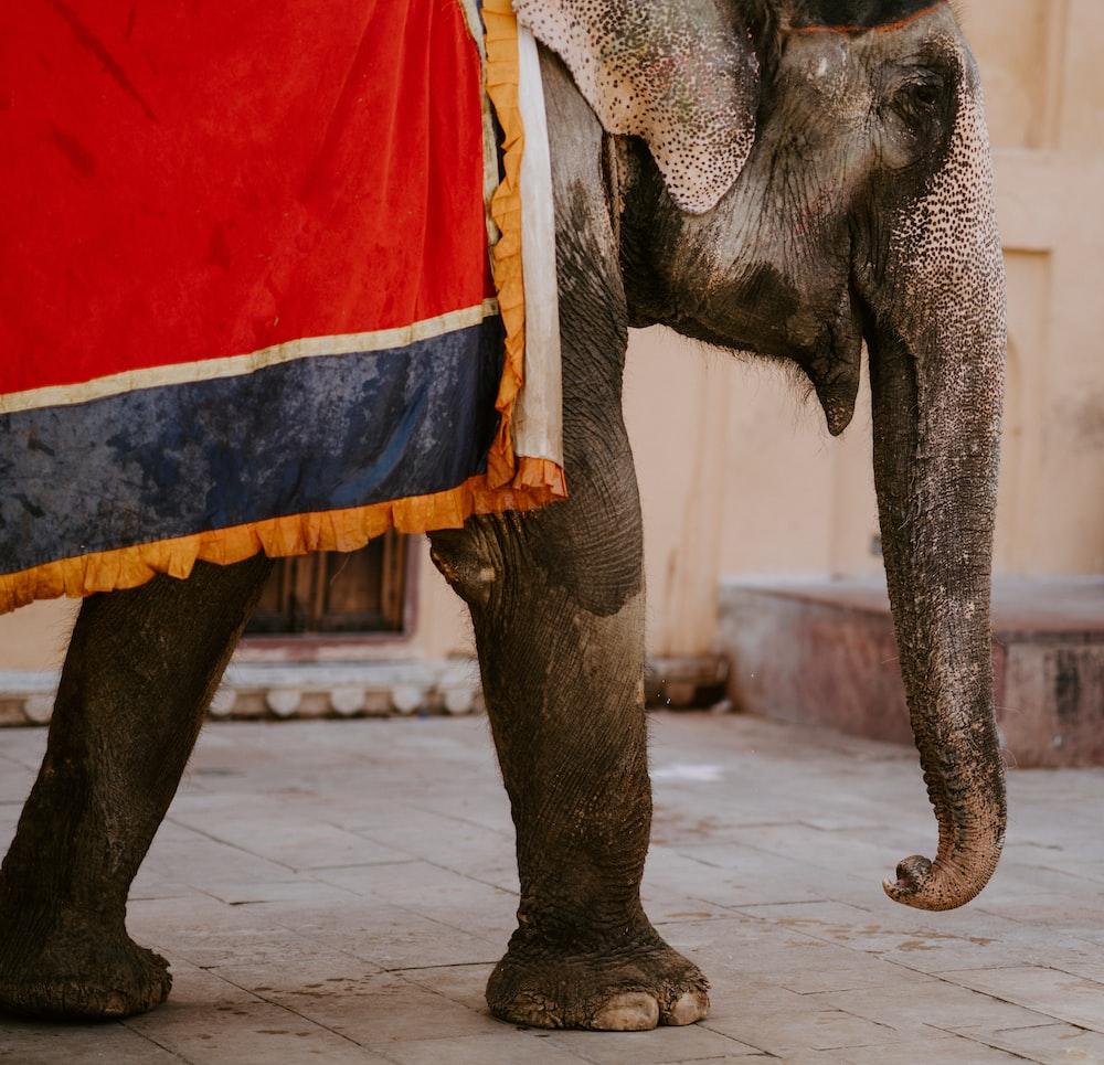 photography of walking elephant