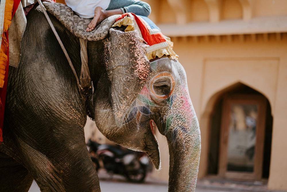closeup photo of person riding on elephant