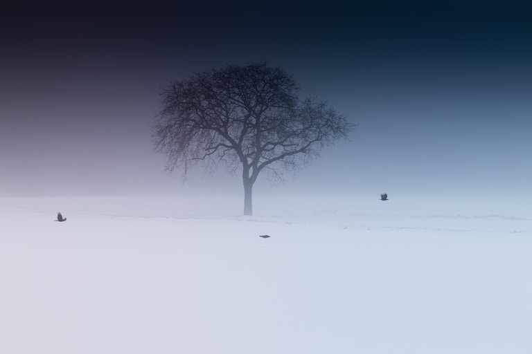 snow covered lone tree