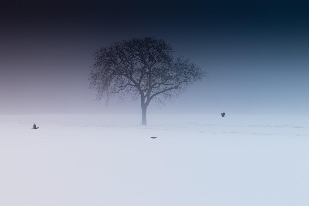 Single Tree Two