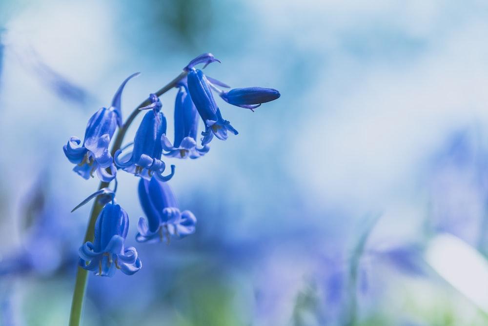 downright blue flowers