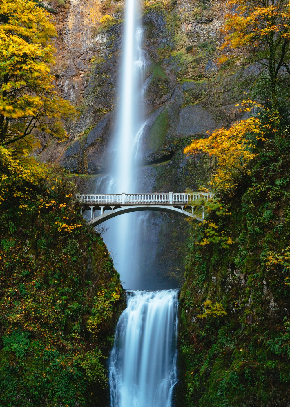 bridge in between trees