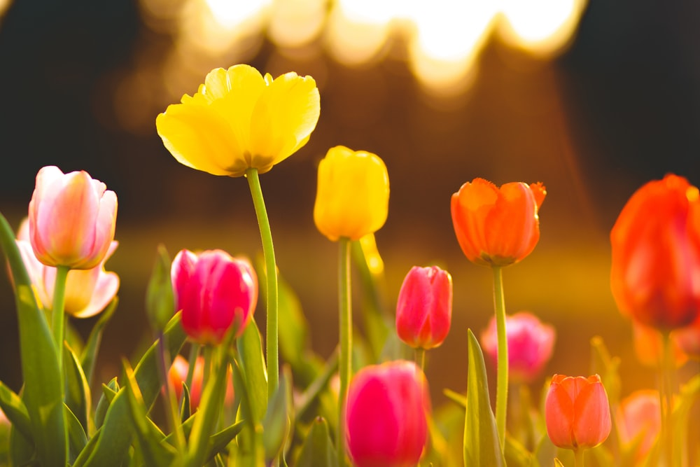 macro shot photography of flower field