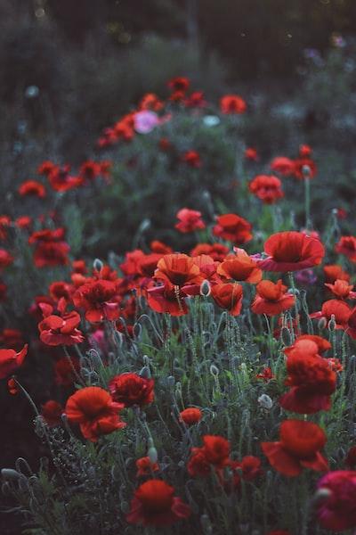 1589. Növények világa