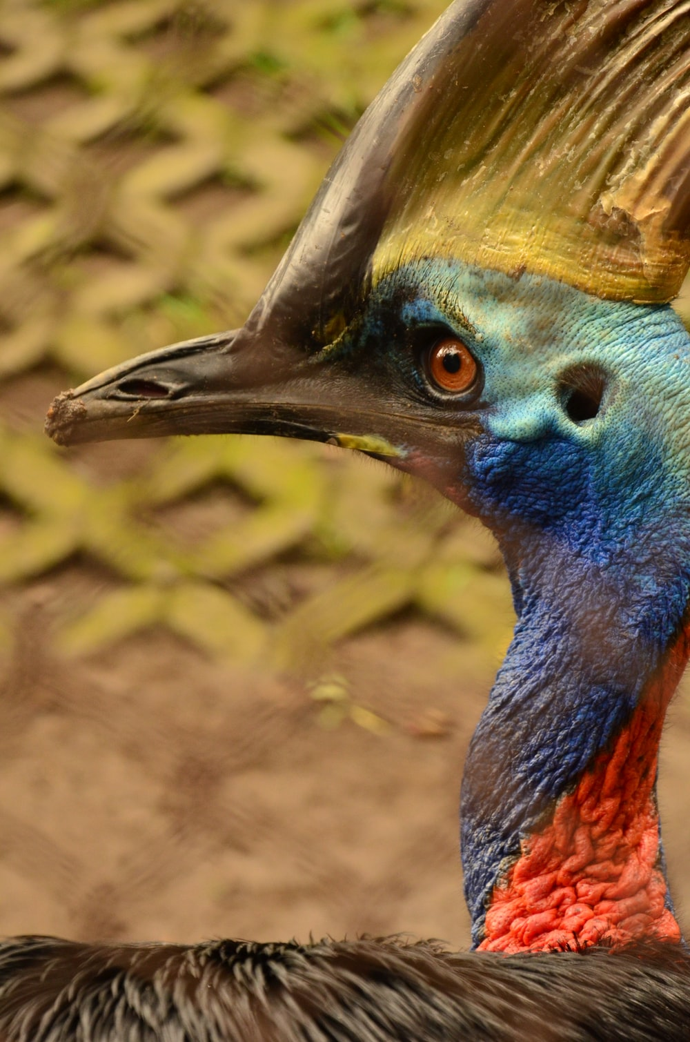 blue, red, and yellow bird