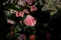 shallow focus photo of pink roses