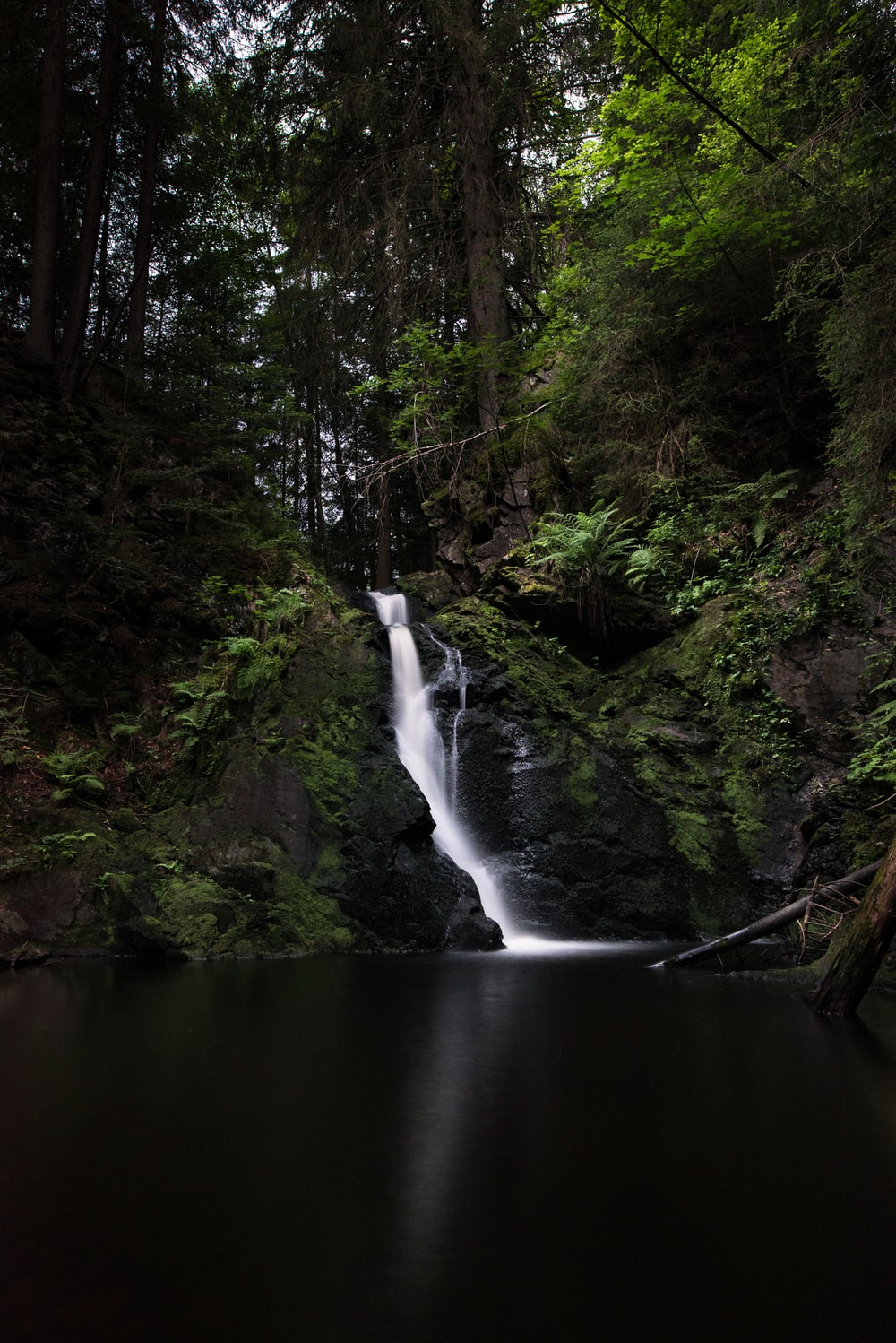 waterfalls surround by green trees