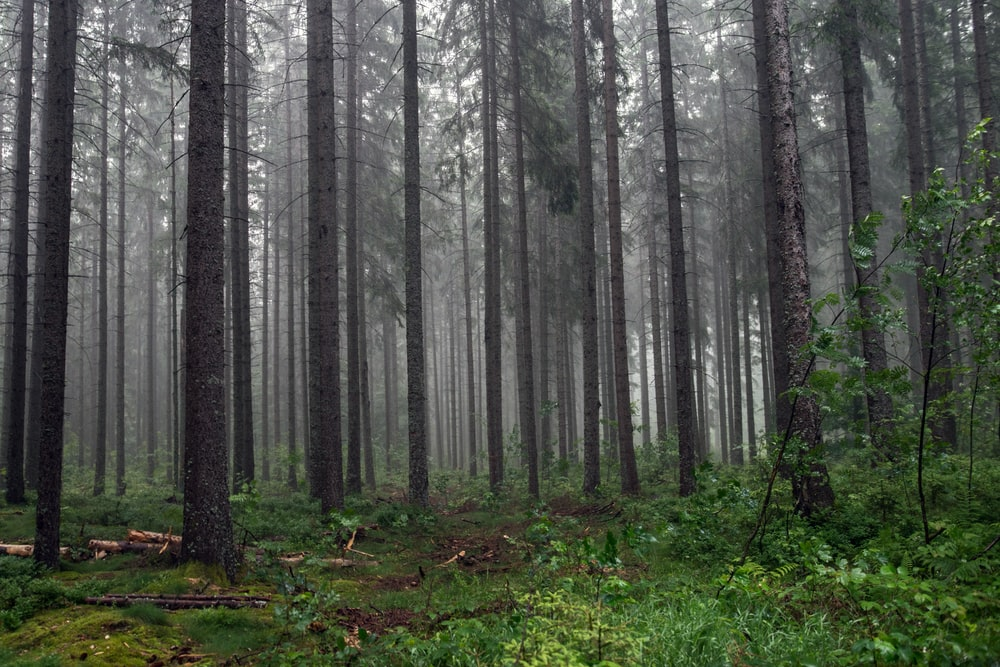 photograph of woods