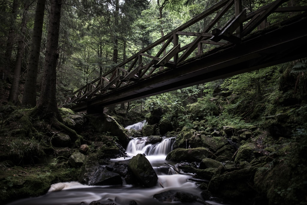 low angle photography of bridge over spring at woods