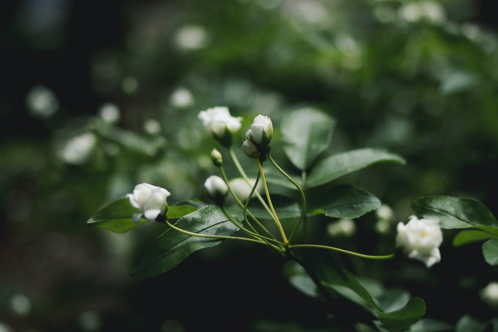 selective focus photograph of white flower