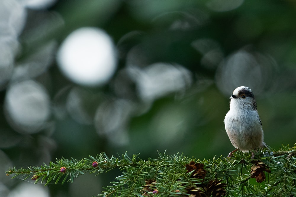 white and brown bird on green wreath