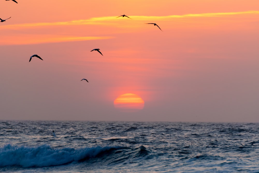 flying birds on sea during golden hour