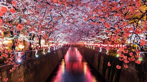 Japan is where I rather be