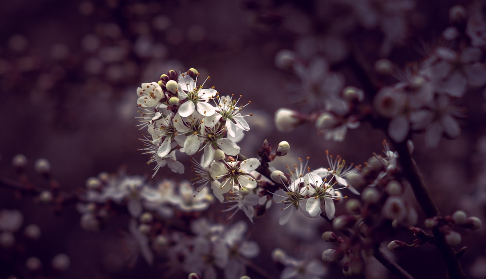 shallow focus photography of white petal flowers