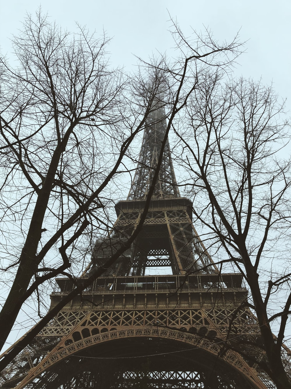 two bare trees near Eiffel Tower
