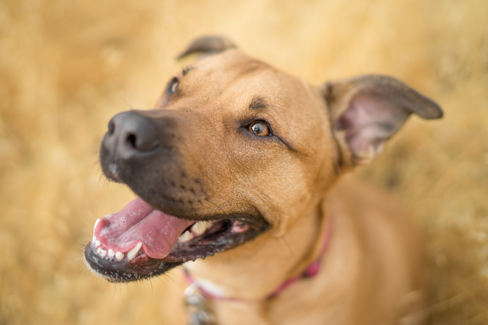 Scientists Confirm That Dogs Can Sense Bad People