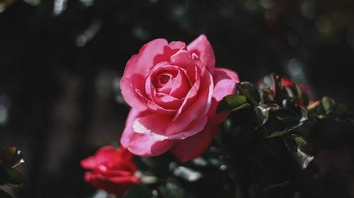 11:00am – The Rose Path