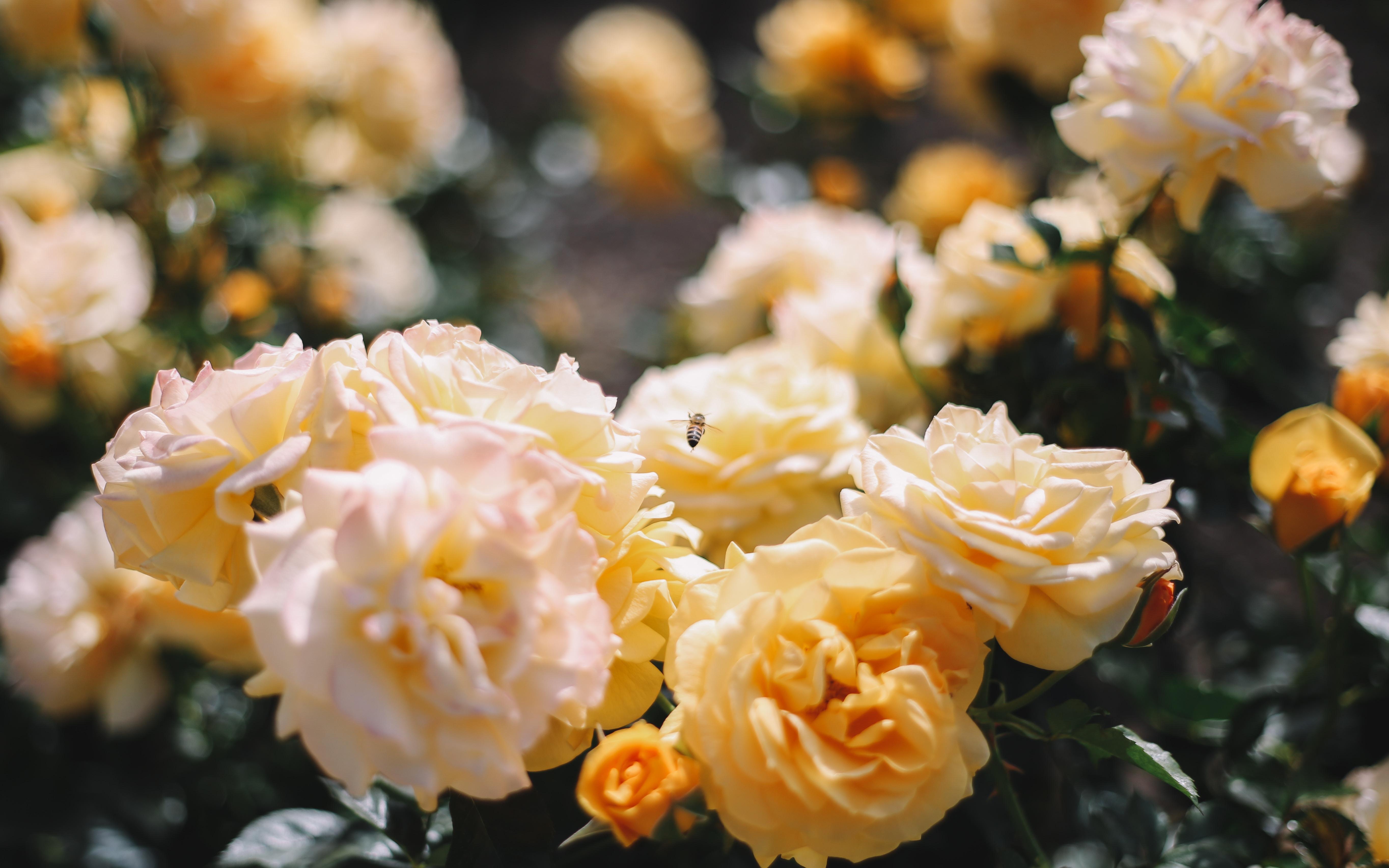 closeup photo of yellow carnation flower