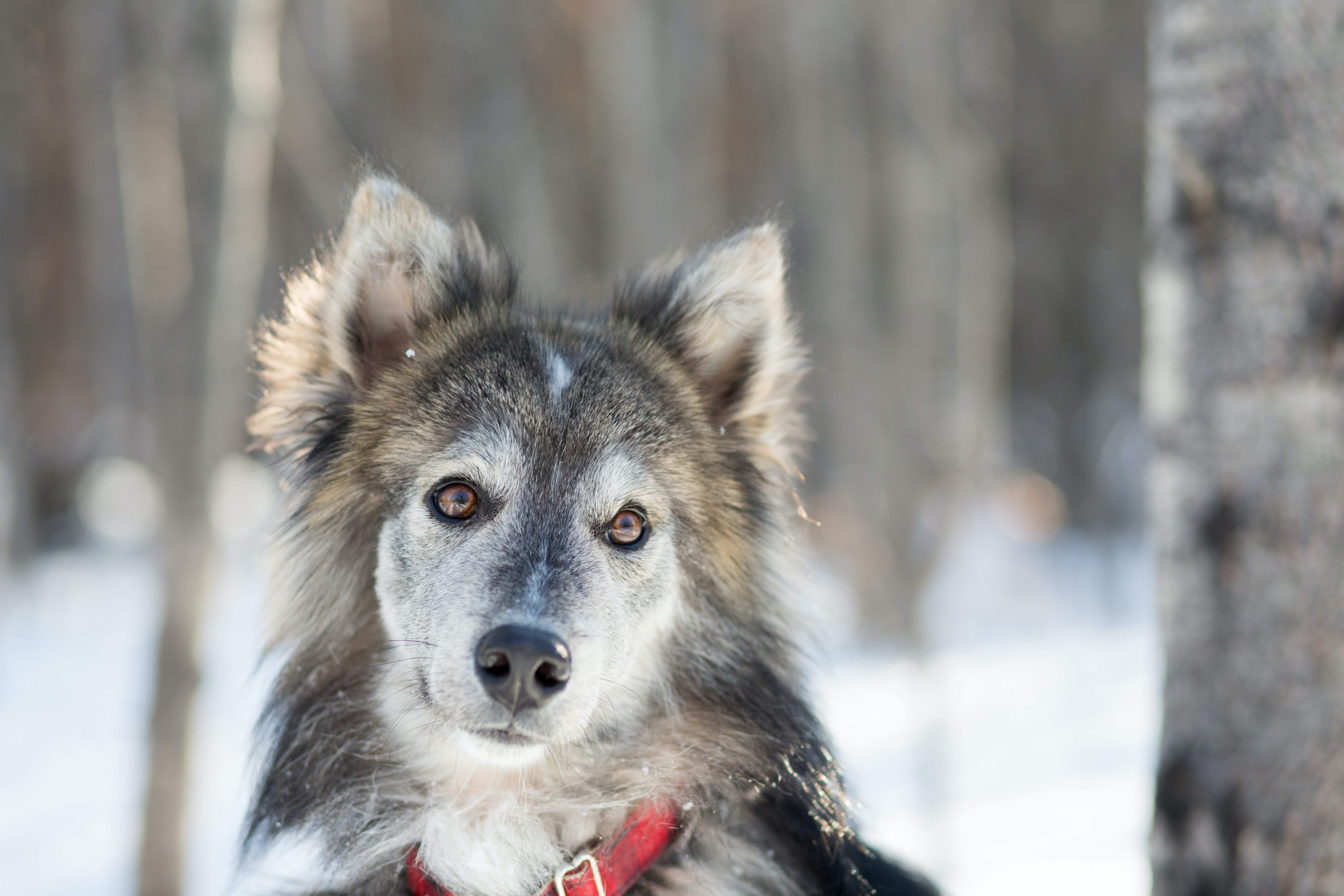 selective focus photography of wolf