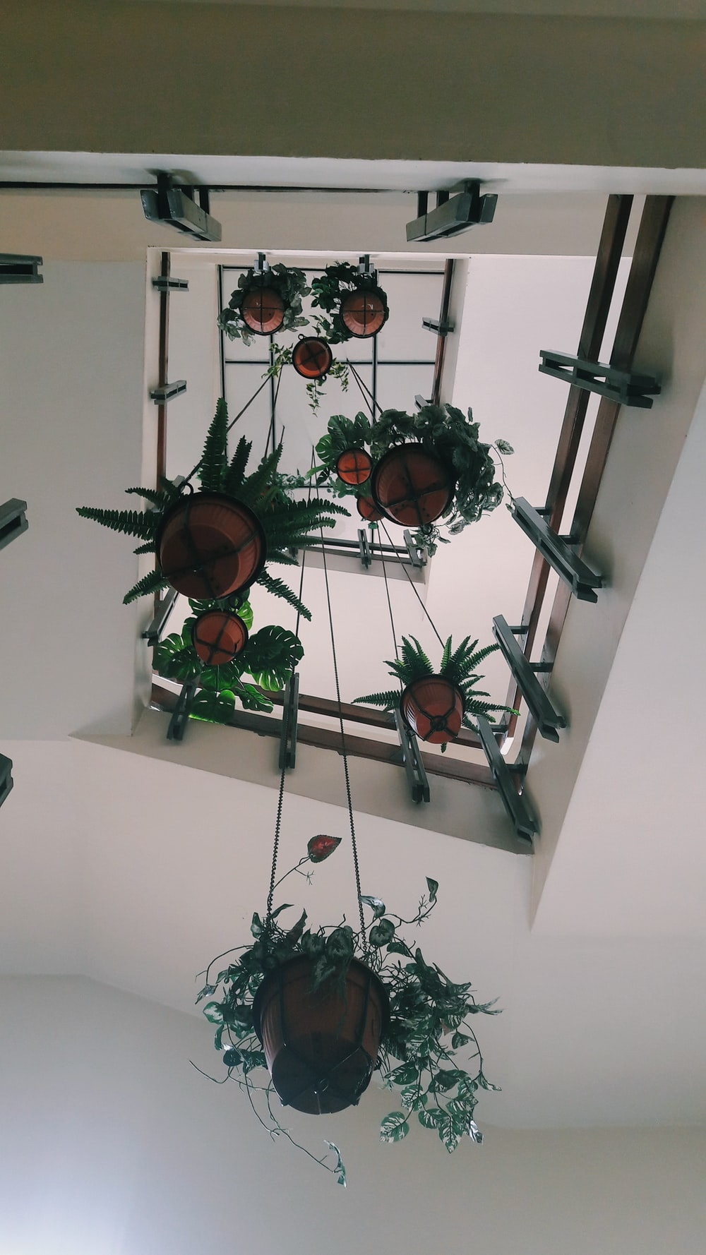 low angle photography of plant pots hanging on ceiling