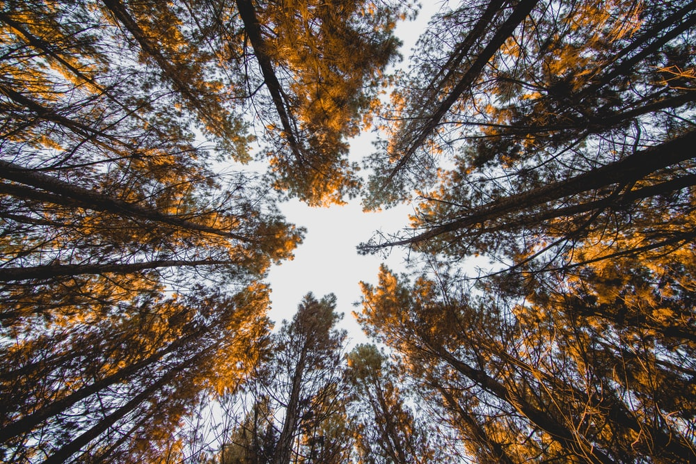 low angle photography of forest