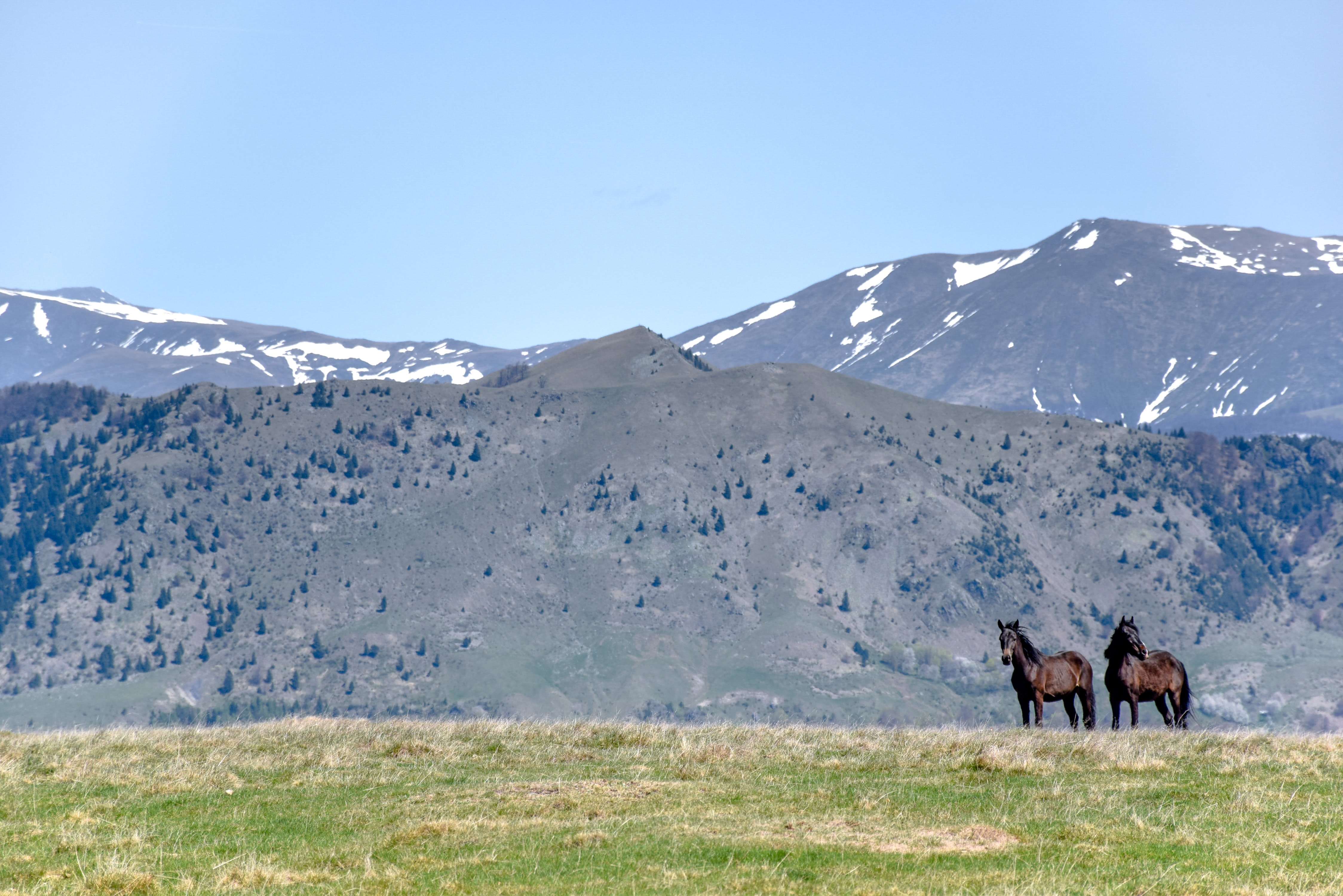 two brown horses near mountain at daytime