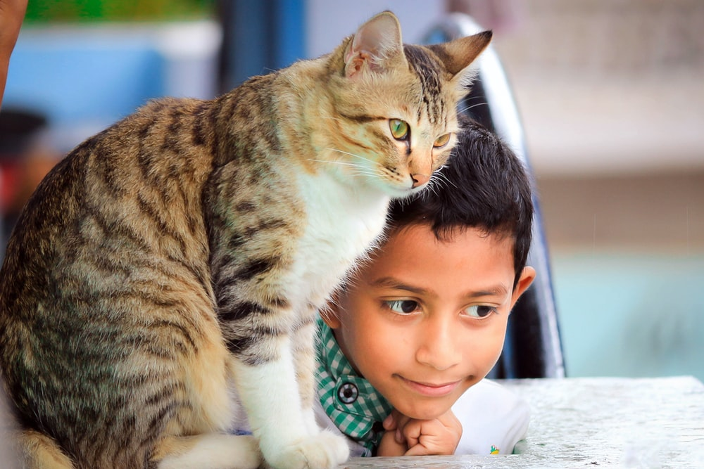close up photography of boy laying beside cat on table