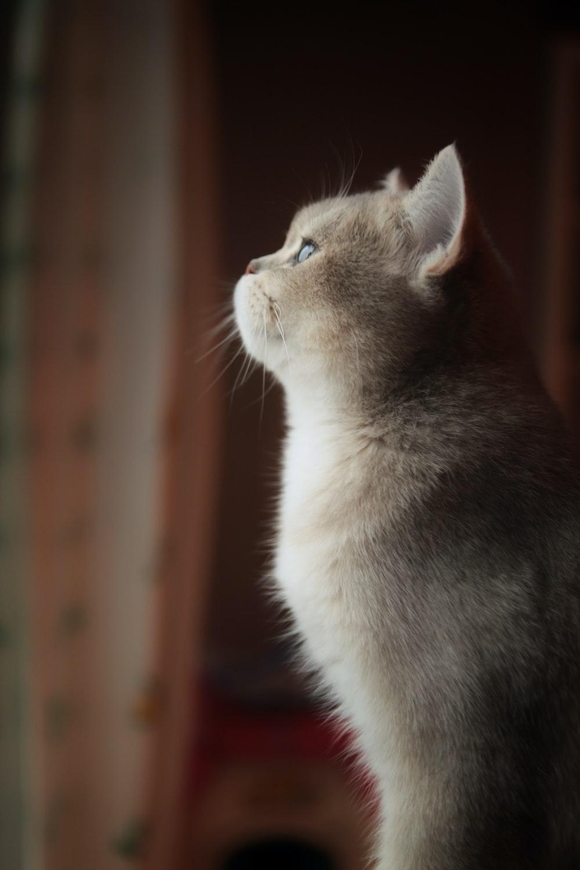 8b59f6d6afa48a Cat, animal, pet and ear | HD photo by Chuan Xu (@chuanxu) on Unsplash