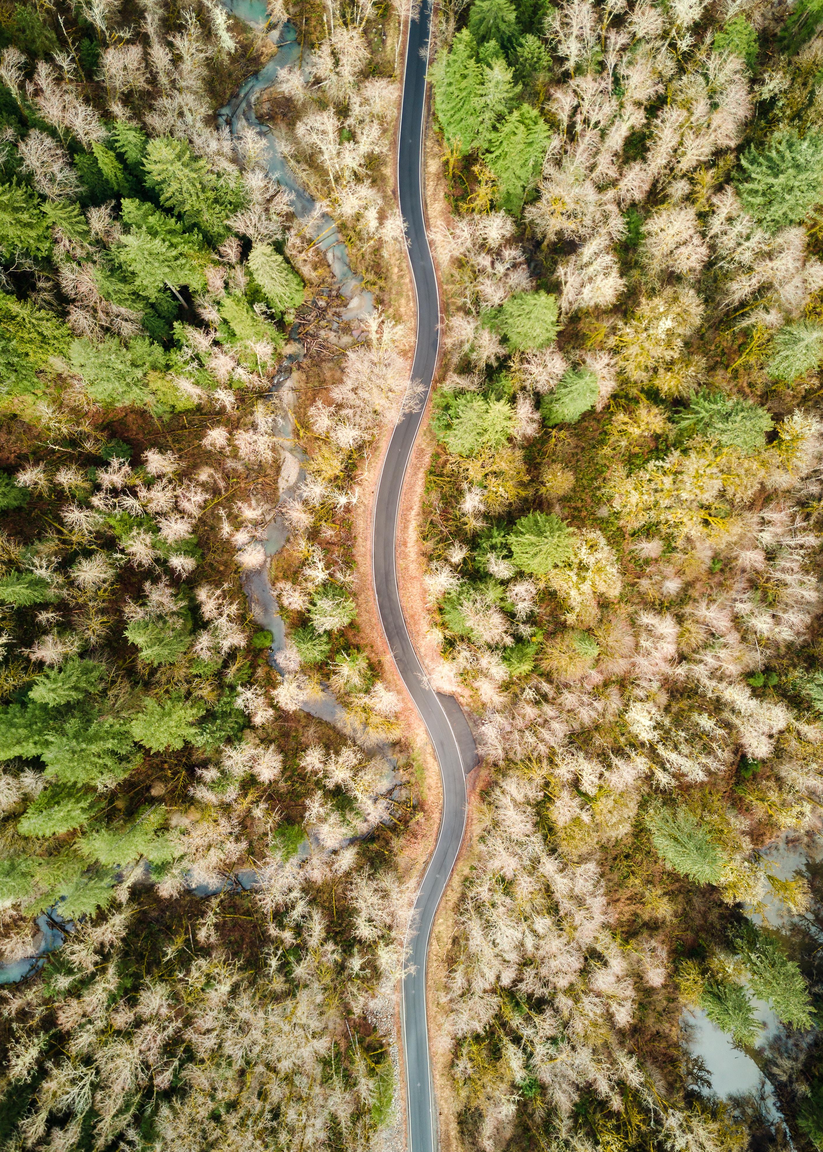 aerial view of road between trees
