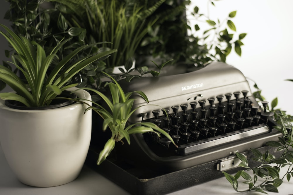 silver typewriter surrounded with green leafed plant