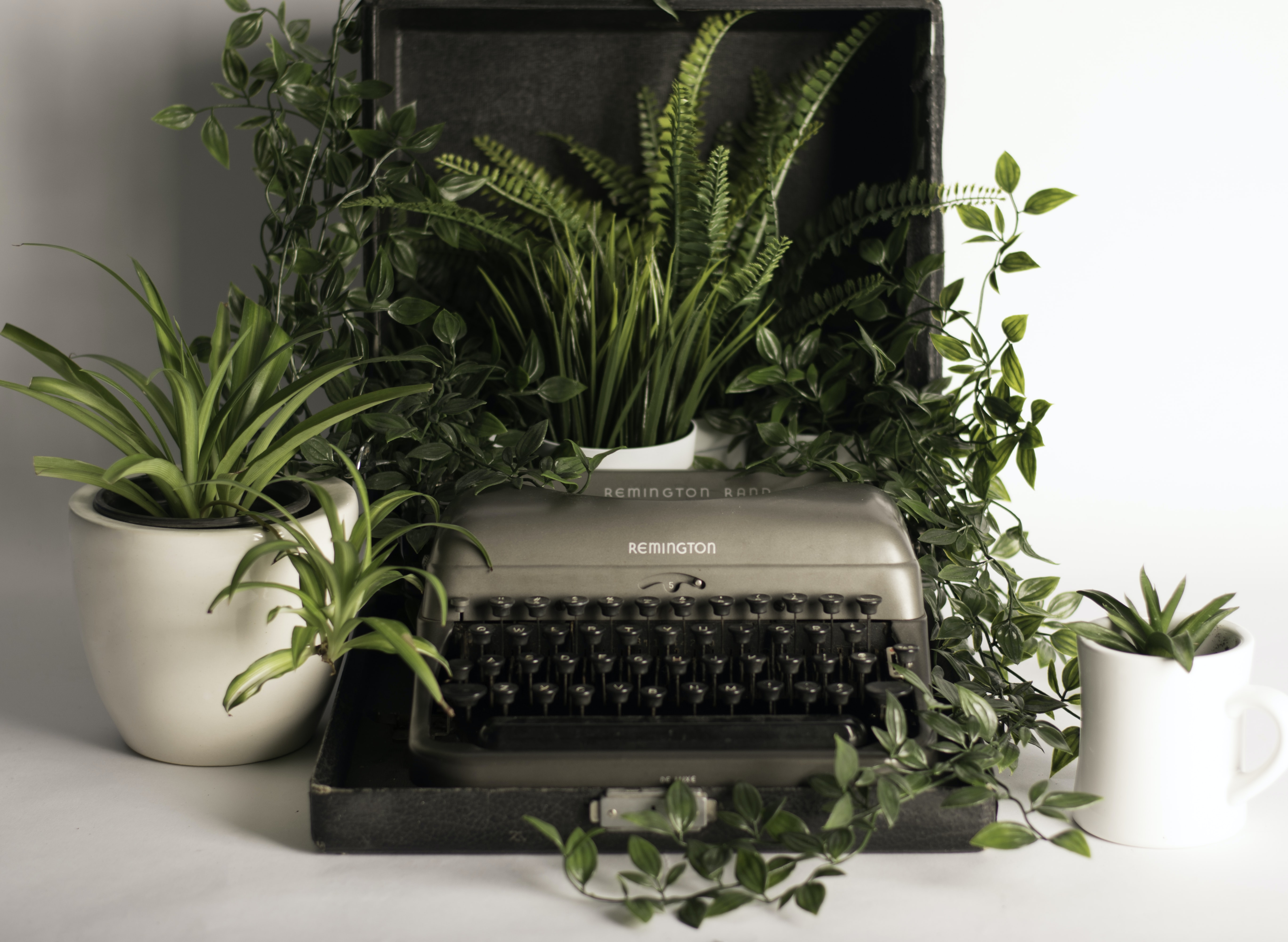 gray and black typewriter pot with green leaf plants