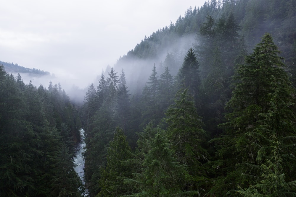aerial photography of river between pine trees leading to mountain during daytime