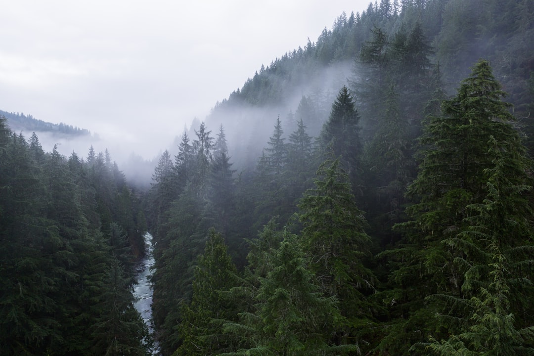 Clouds drift over the tree tops and the Carbonado river near the Fairfax Bridge in Washington.