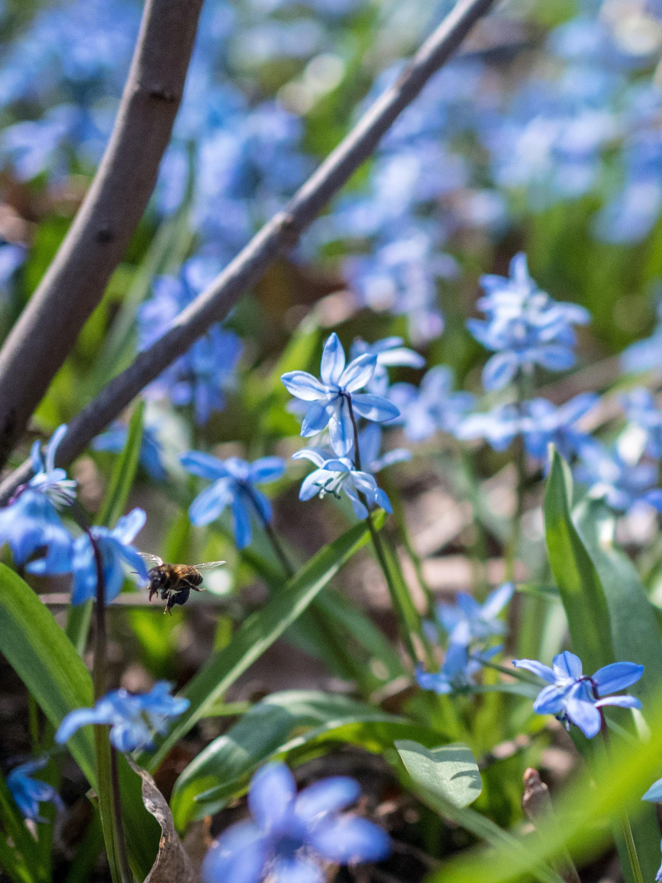 yellow bee flying beside blue flower