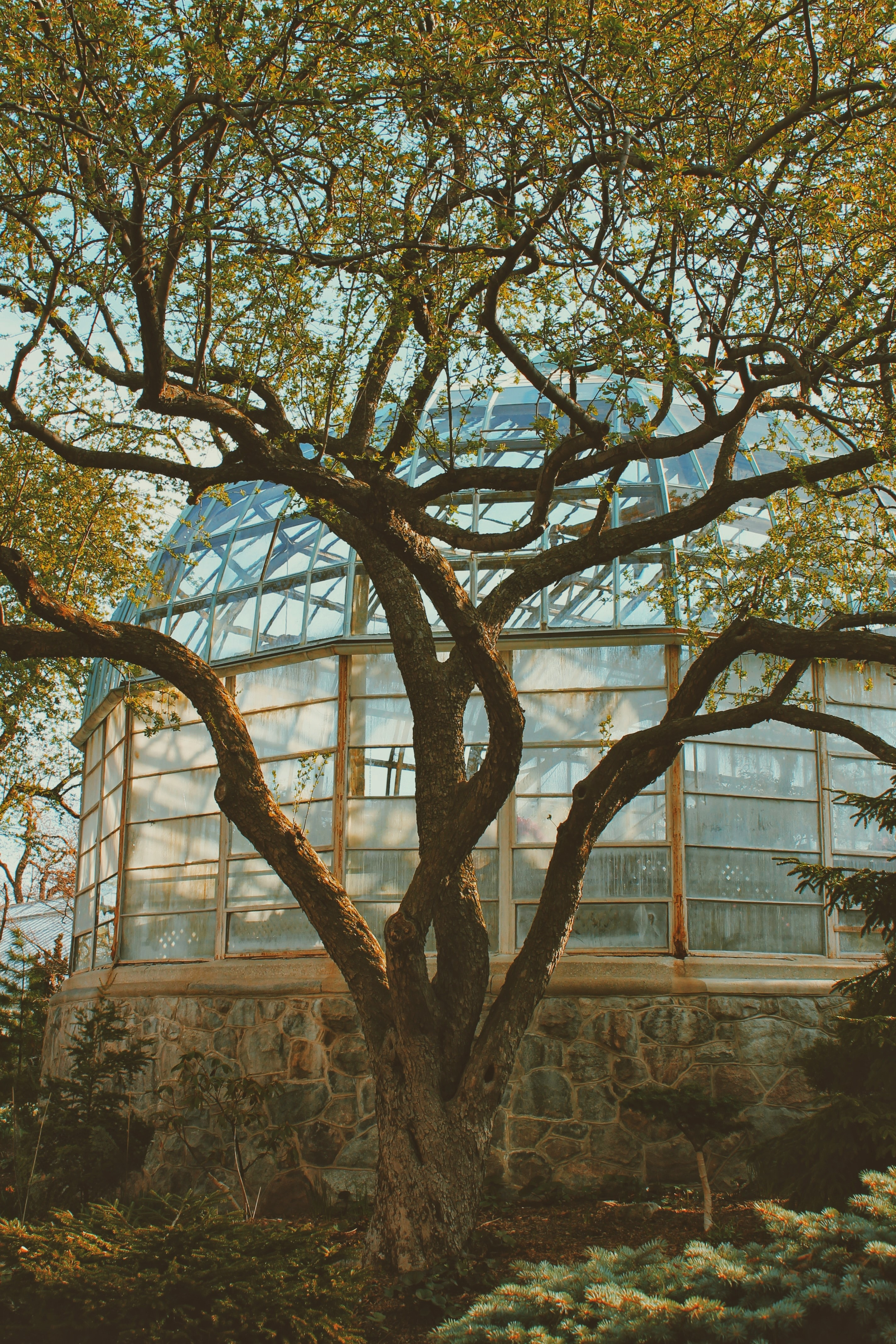 tree near glass green house