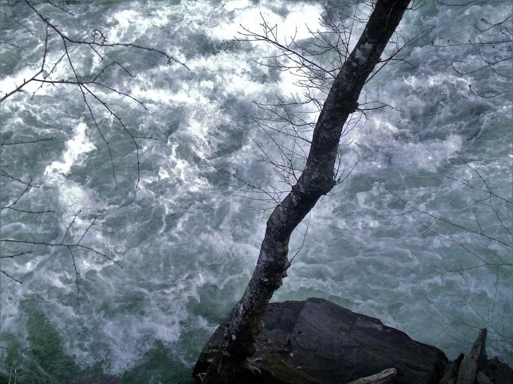 gray tree trunk near body of water