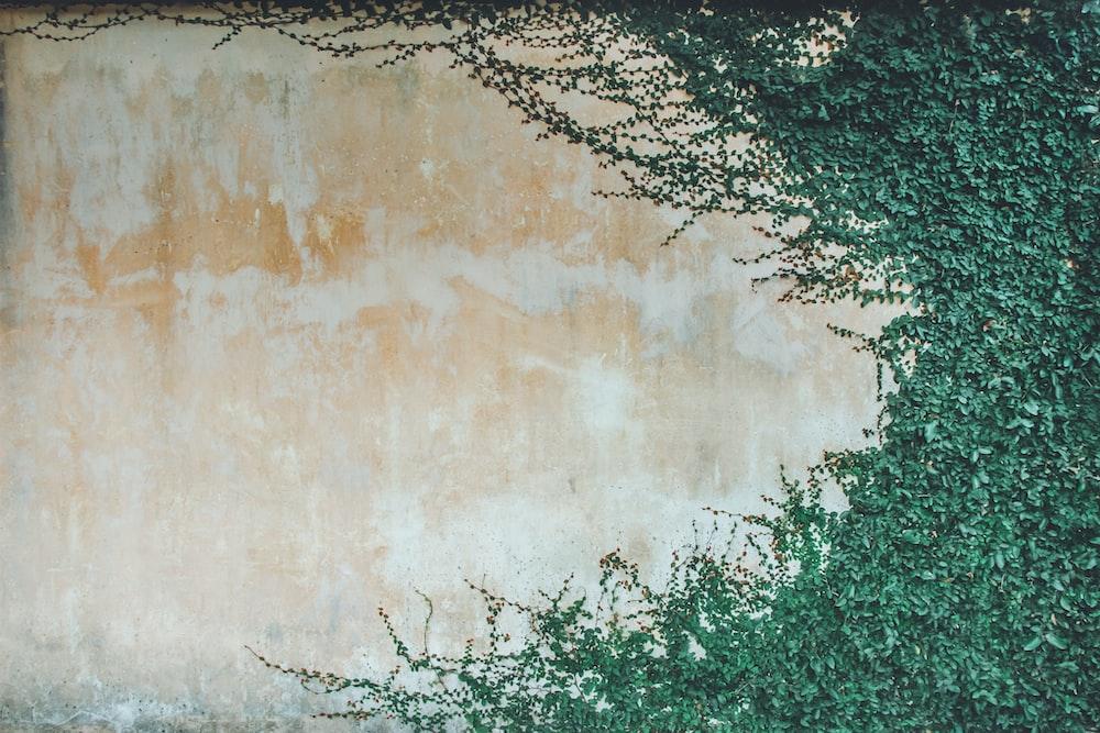 beige wall covered green leaf plants