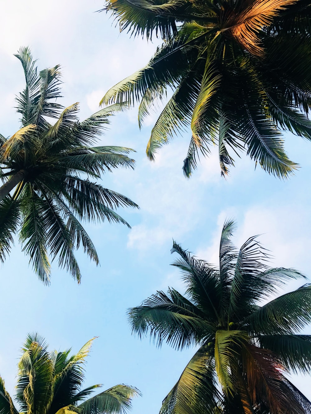 low angle photography of palm trees