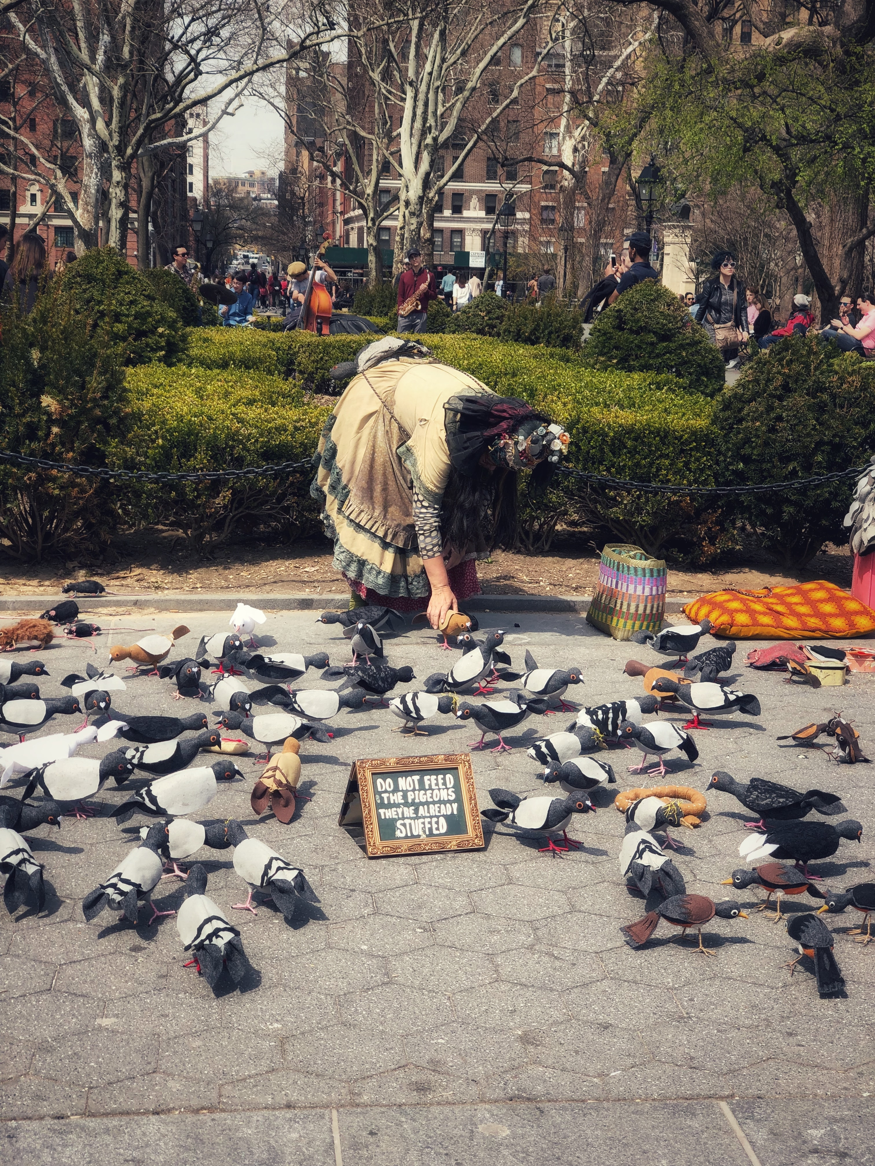 person holding pigeons on park