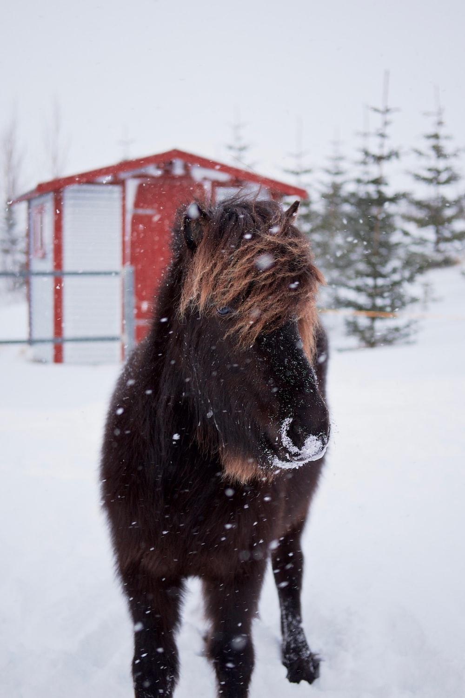 brown horse during winter season