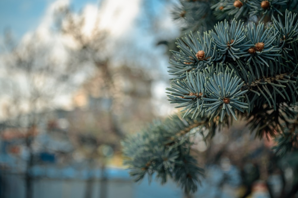 closeup photography of green tree