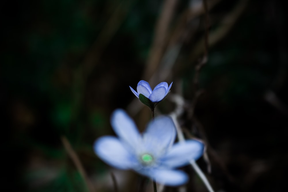 shallow focus photography of blue flowers during daytime