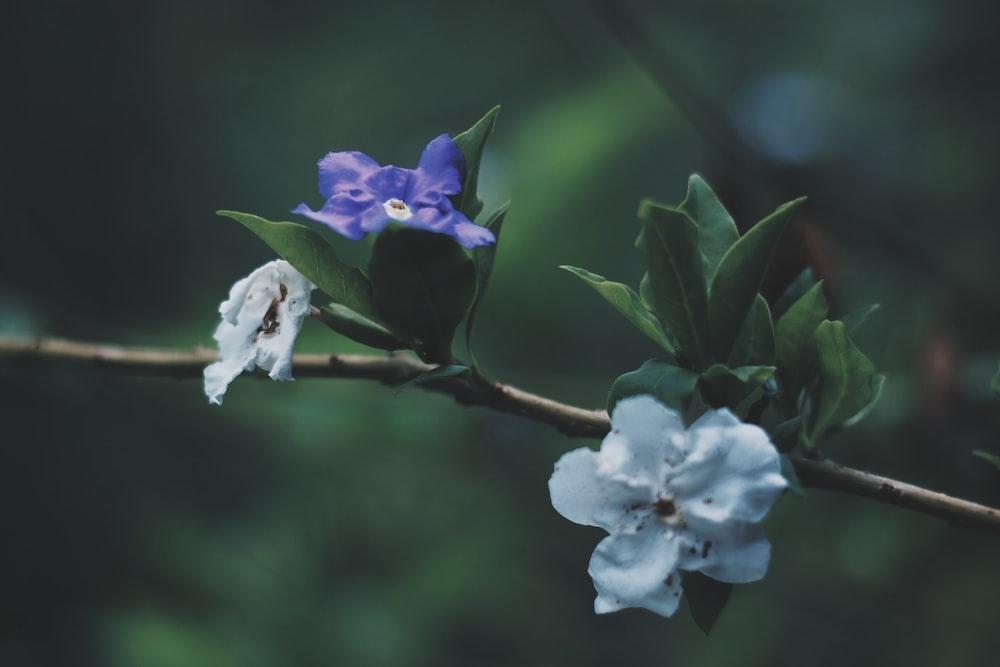 purple and white flowered tree