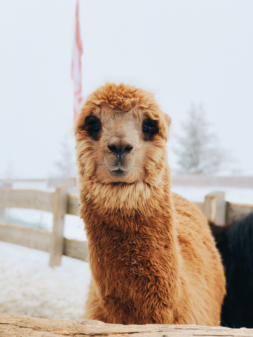 brown llama under cloudy sky during daytime