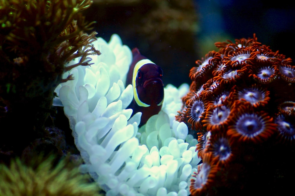 purple and white fish on coral reef